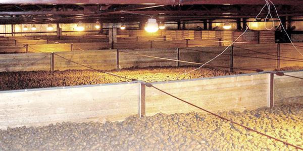 wie kartoffeln lagern